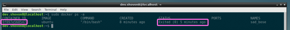 Install Docker on Raspberry Pi – Linux Hint